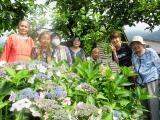 紫陽花見学 (3)